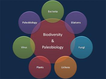 biodiversity-paleobiology-new