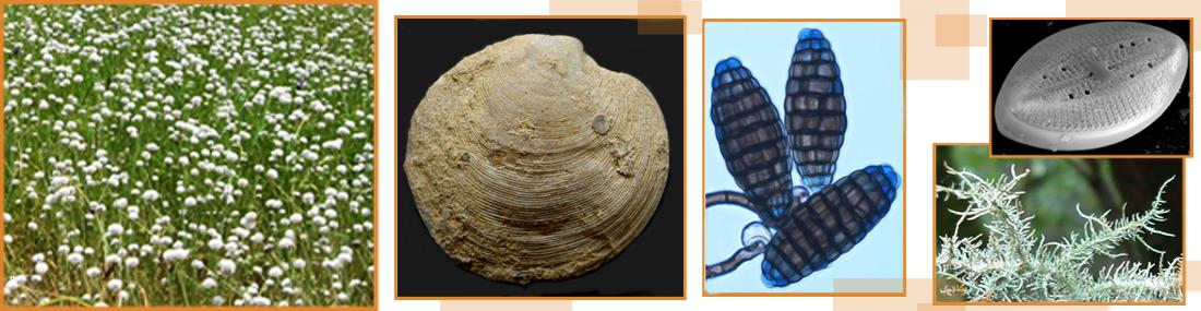biodiversity-paleobiology-topbanner