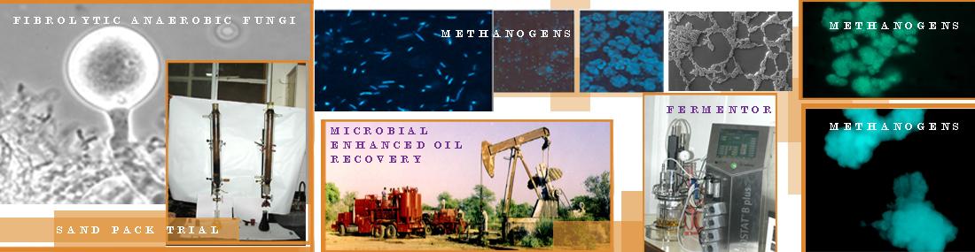 bioenergy-topbanner