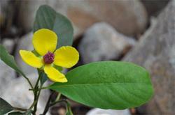 biodiversity-ritesh-image1