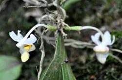 biodiversity-ritesh-image2
